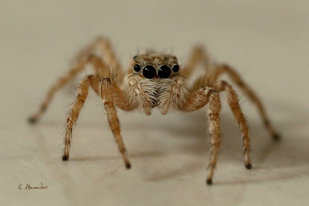 Critical Thinking In Spidery Prose