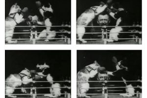 Galloping Horses To Boxing Cats: Movies In Education